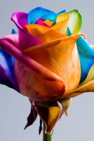 Розы в подарок поделиться ссылкой
