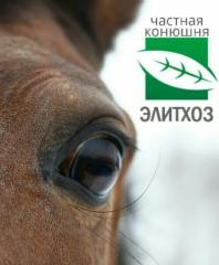 «Конный клуб Элитхоз»